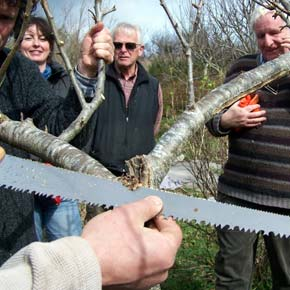 Andy Wilson (hand holding saw) giving a previous fruit-tree pruning and maintenance workshop hosted by the Westport Sustainability Group. Also pictured are Willie McDonagh (on left hand edge) Caithriona McCarthy, Chris Harmon and Pat Bracken.