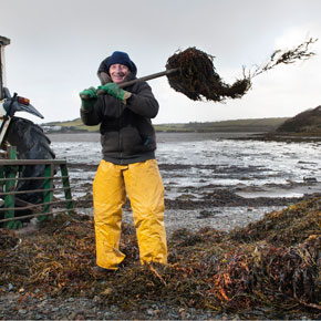 Jack Higgins has been cutting the seaweed along the undulating coastline around Kilmeena for 54 years.